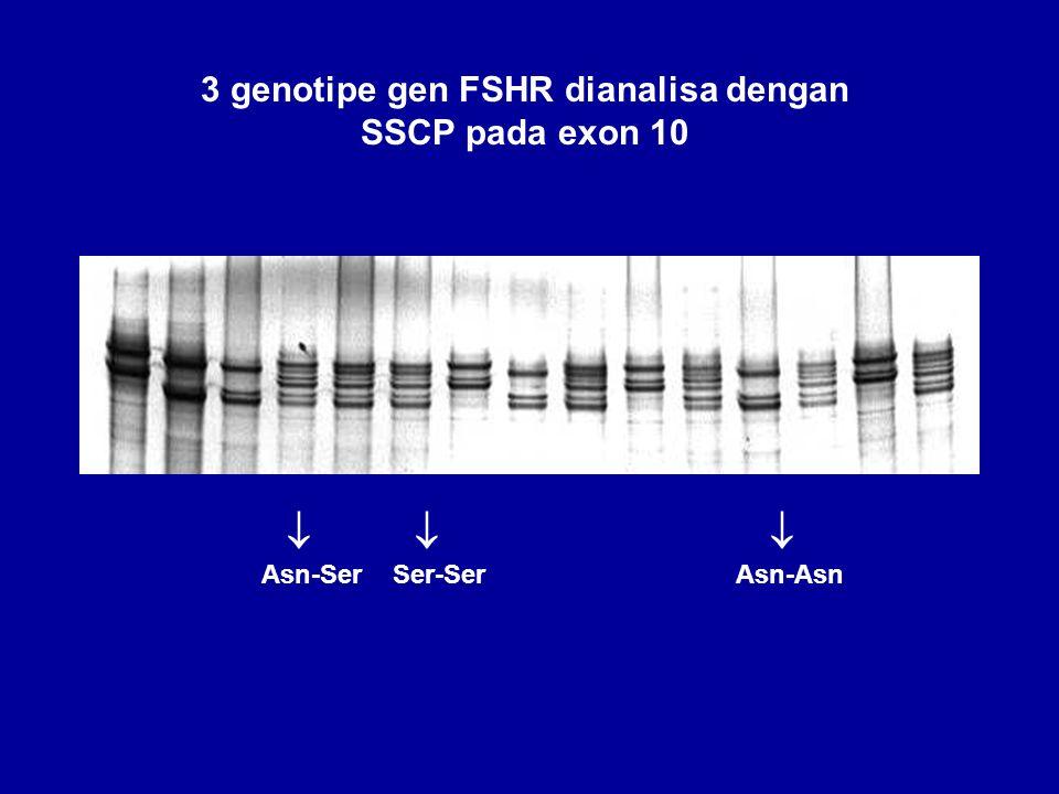    Asn-Ser Ser-Ser Asn-Asn 3 genotipe gen FSHR dianalisa dengan SSCP pada exon 10