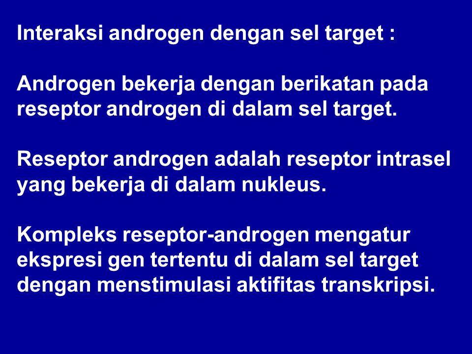 Interaksi androgen dengan sel target : Androgen bekerja dengan berikatan pada reseptor androgen di dalam sel target. Reseptor androgen adalah reseptor
