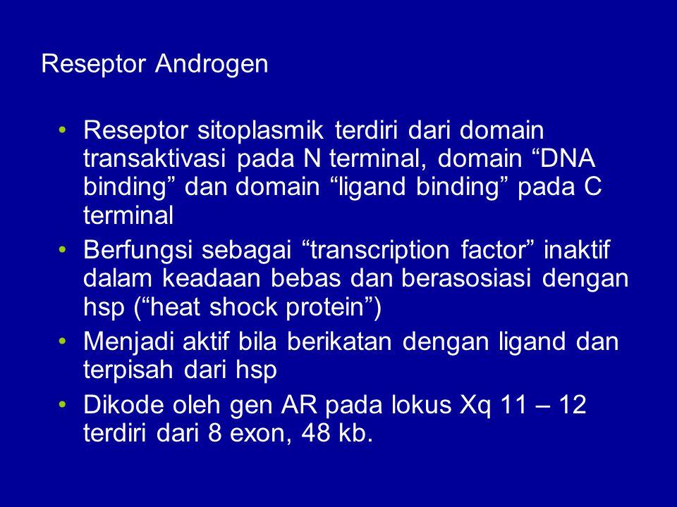 """Reseptor Androgen Reseptor sitoplasmik terdiri dari domain transaktivasi pada N terminal, domain """"DNA binding"""" dan domain """"ligand binding"""" pada C term"""