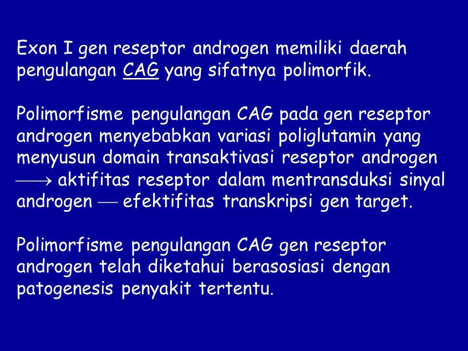 Exon I gen reseptor androgen memiliki daerah pengulangan CAG yang sifatnya polimorfik. Polimorfisme pengulangan CAG pada gen reseptor androgen menyeba