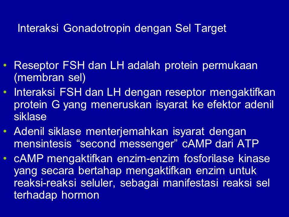 Interaksi Gonadotropin dengan Sel Target Reseptor FSH dan LH adalah protein permukaan (membran sel) Interaksi FSH dan LH dengan reseptor mengaktifkan