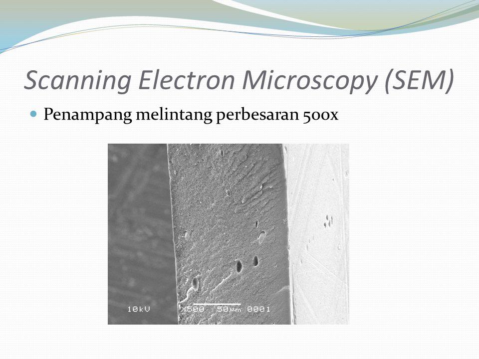 Penampang melintang perbesaran 500x Scanning Electron Microscopy (SEM)