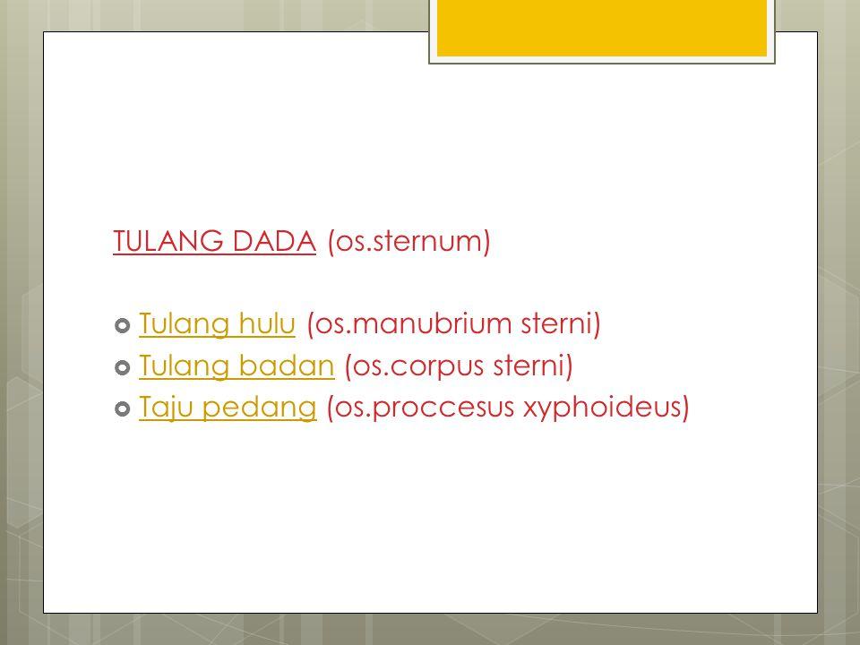 TULANG DADA (os.sternum)  Tulang hulu (os.manubrium sterni) Tulang hulu  Tulang badan (os.corpus sterni) Tulang badan  Taju pedang (os.proccesus xy