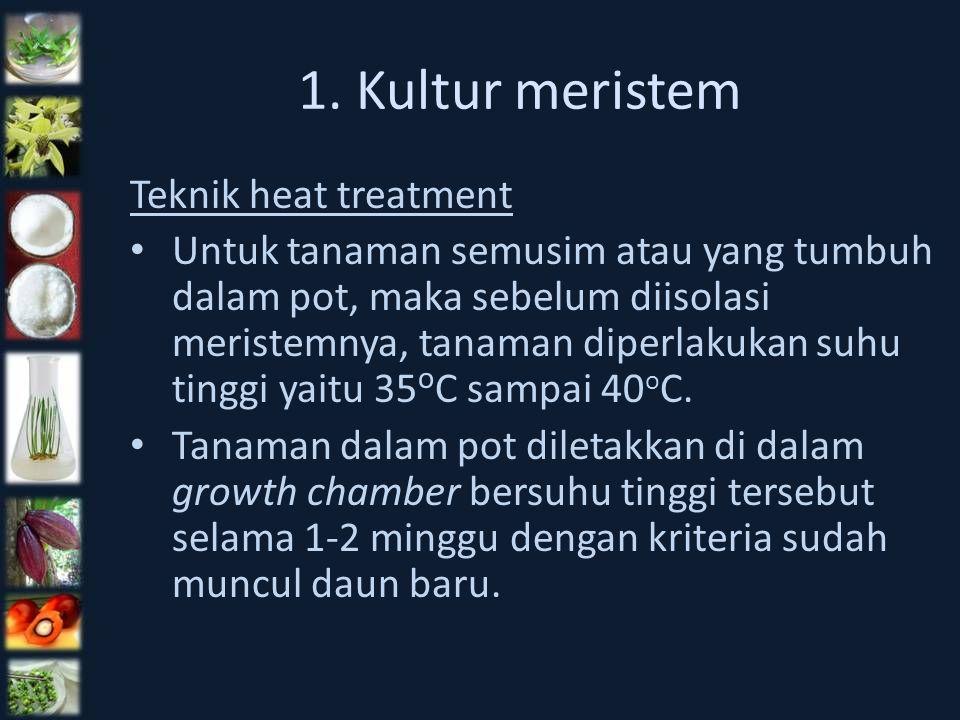 1. Kultur meristem Teknik heat treatment Untuk tanaman semusim atau yang tumbuh dalam pot, maka sebelum diisolasi meristemnya, tanaman diperlakukan su