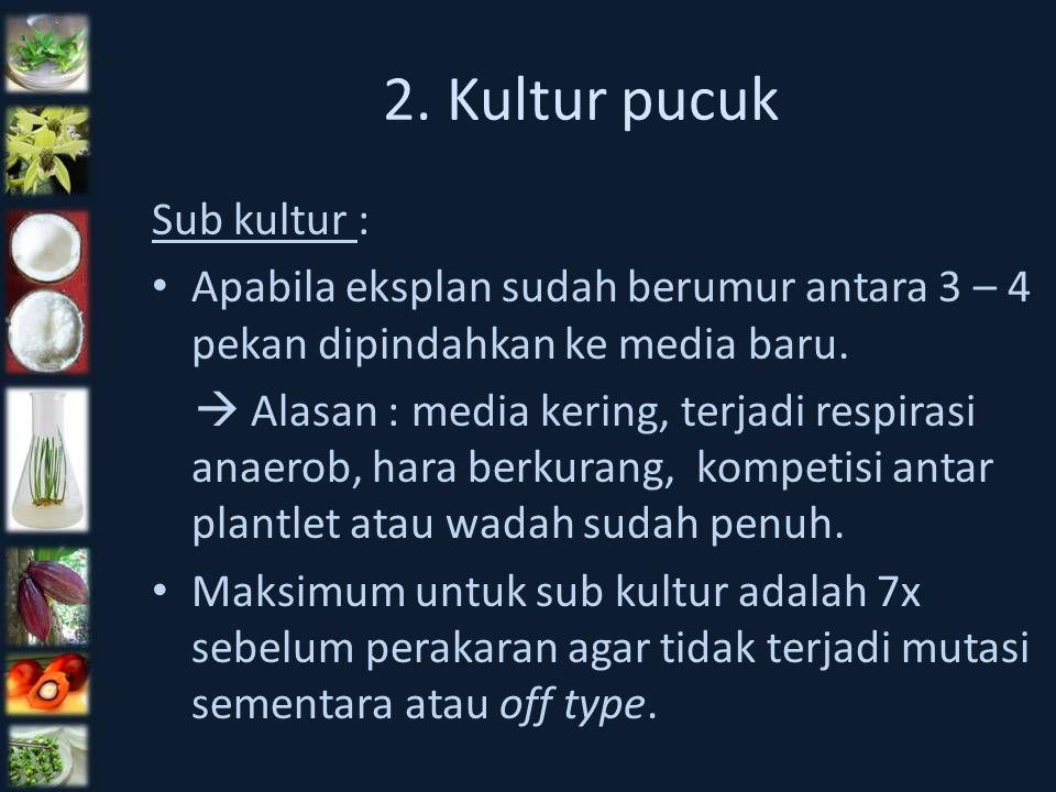 2. Kultur pucuk Sub kultur : Apabila eksplan sudah berumur antara 3 – 4 pekan dipindahkan ke media baru.  Alasan : media kering, terjadi respirasi an