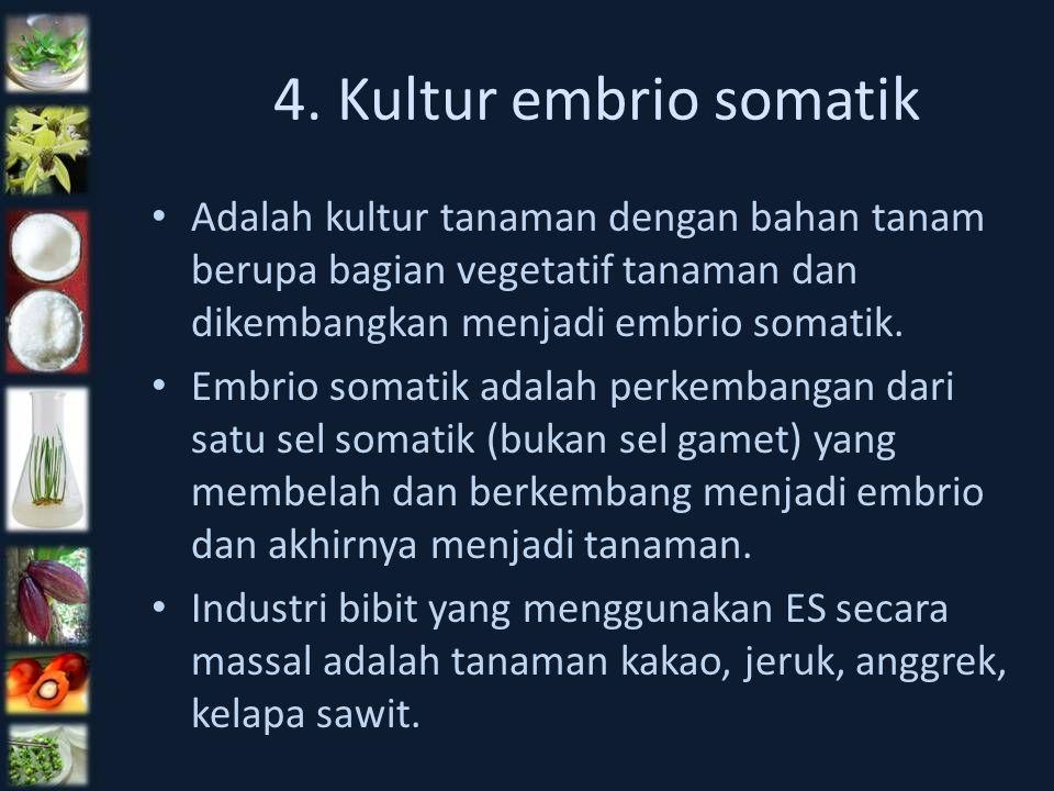4. Kultur embrio somatik Adalah kultur tanaman dengan bahan tanam berupa bagian vegetatif tanaman dan dikembangkan menjadi embrio somatik. Embrio soma