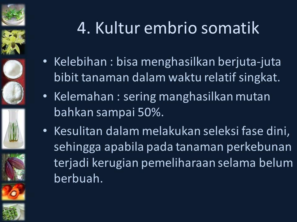4. Kultur embrio somatik Kelebihan : bisa menghasilkan berjuta-juta bibit tanaman dalam waktu relatif singkat. Kelemahan : sering manghasilkan mutan b