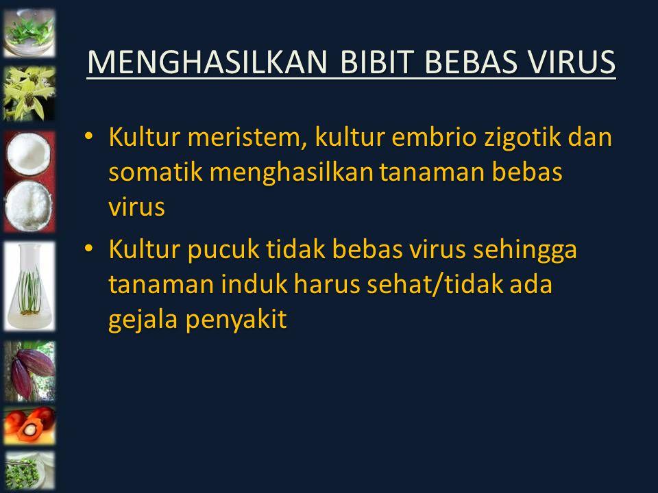 MENGHASILKAN BIBIT BEBAS VIRUS Kultur meristem, kultur embrio zigotik dan somatik menghasilkan tanaman bebas virus Kultur pucuk tidak bebas virus sehi