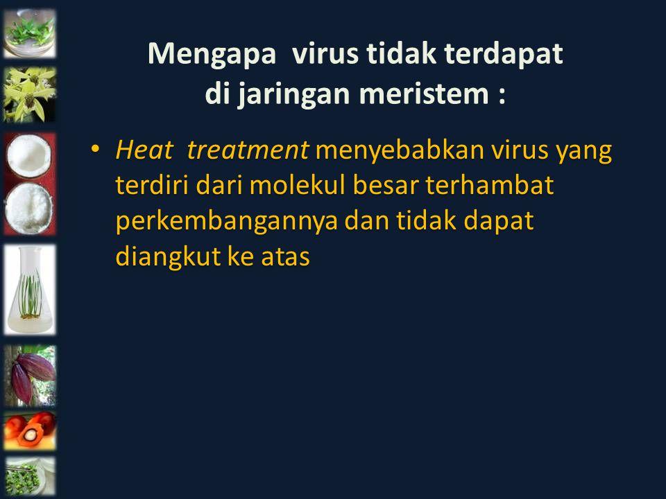 Heat treatment menyebabkan virus yang terdiri dari molekul besar terhambat perkembangannya dan tidak dapat diangkut ke atas Mengapa virus tidak terdap