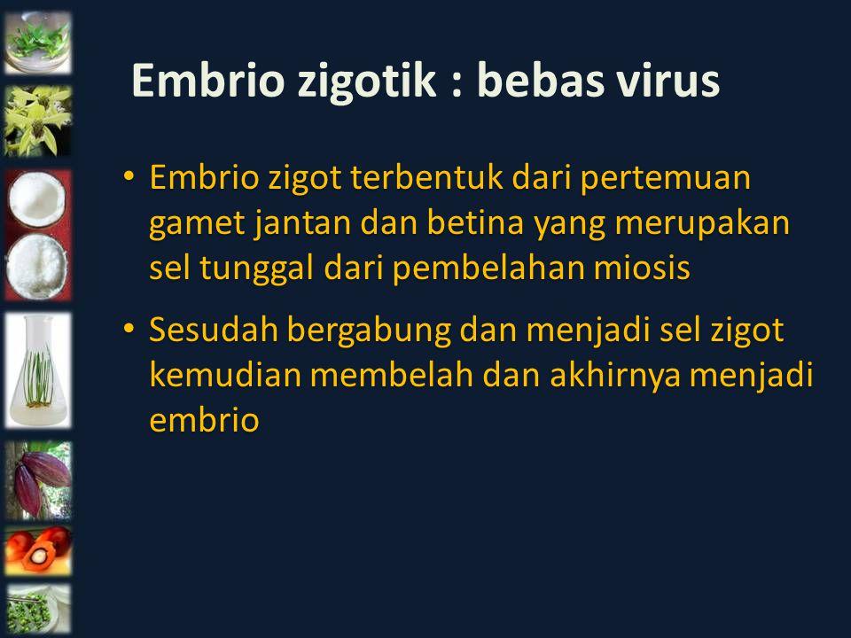 Embrio zigotik : bebas virus Embrio zigot terbentuk dari pertemuan gamet jantan dan betina yang merupakan sel tunggal dari pembelahan miosis Sesudah b