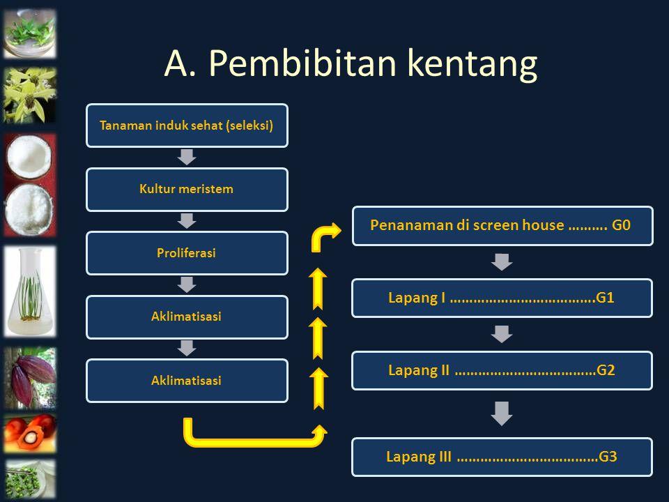 A. Pembibitan kentang Tanaman induk sehat (seleksi)Kultur meristemProliferasi Aklimatisasi Penanaman di screen house ………. G0 Lapang I ……………………………….G1L