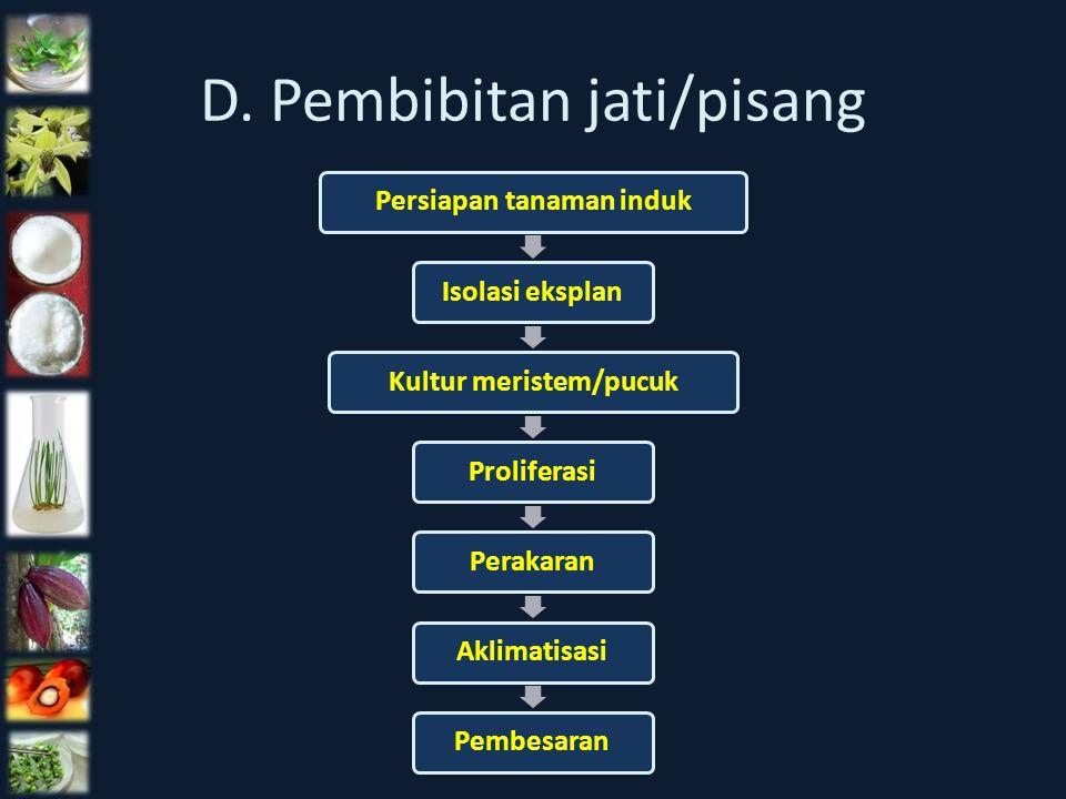 D. Pembibitan jati/pisang Persiapan tanaman indukIsolasi eksplanKultur meristem/pucukProliferasiPerakaranAklimatisasiPembesaran