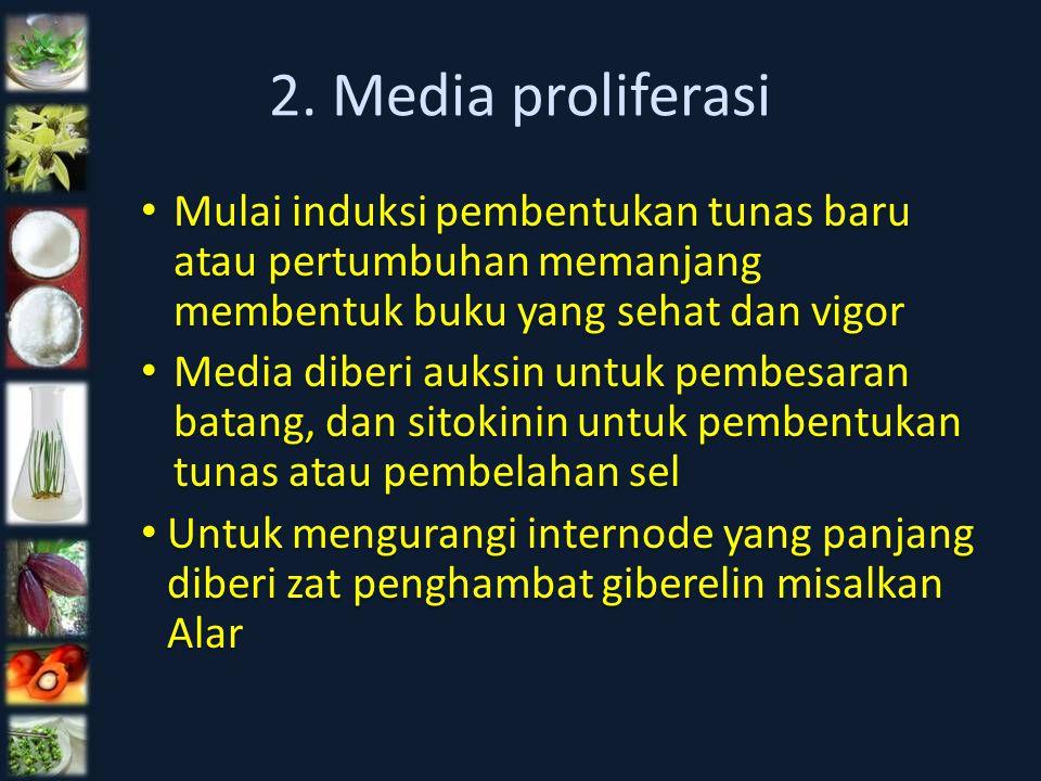 2. Media proliferasi Mulai induksi pembentukan tunas baru atau pertumbuhan memanjang membentuk buku yang sehat dan vigor Media diberi auksin untuk pem