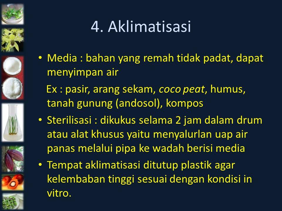 4. Aklimatisasi Media : bahan yang remah tidak padat, dapat menyimpan air Ex : pasir, arang sekam, coco peat, humus, tanah gunung (andosol), kompos St