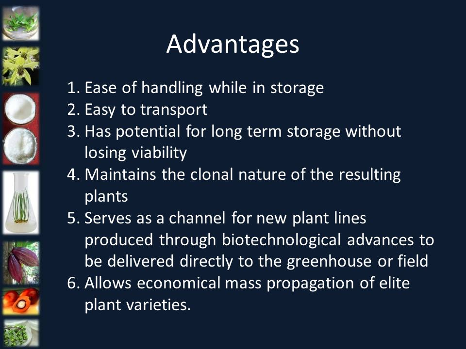 1.Ease of handling while in storage 2.Easy to transport 3.Has potential for long term storage without losing viability 4.Maintains the clonal nature o