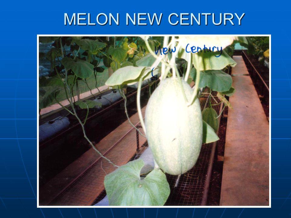 MELON NEW CENTURY