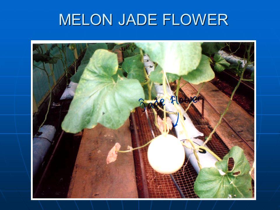 MELON JADE FLOWER