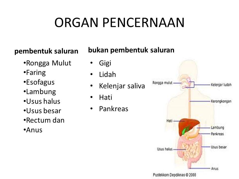 2 jenis gastritis yang paling sering terjadi : 1.