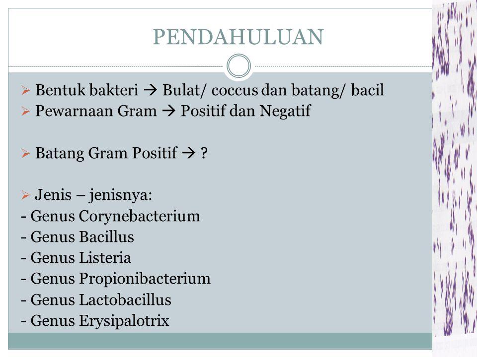PENDAHULUAN  Bentuk bakteri  Bulat/ coccus dan batang/ bacil  Pewarnaan Gram  Positif dan Negatif  Batang Gram Positif  .