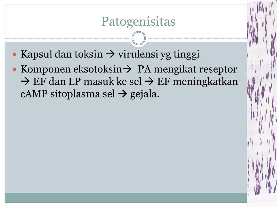 Struktur Antigen Ag kapsul (polipeptida) Ag somatik (polisakarida)  komponen dinding sel Ag toksin (protein)  Eksotoksin yg kompleks  protective Ag