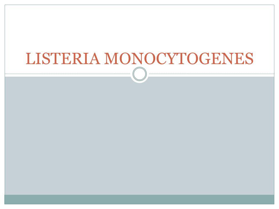 Gambar: (a,b) mikroskopis (c). Kultur B. cereus (a)(b) (c)