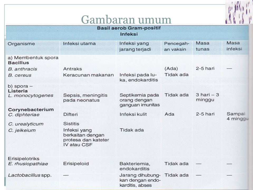 Morfologi Sifat mikroaerofilik - anaerob Bentuk batang Gram positif Motil (-)