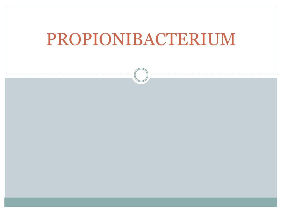 Gambar: Mikroskopis dan kultur Lactobacillus
