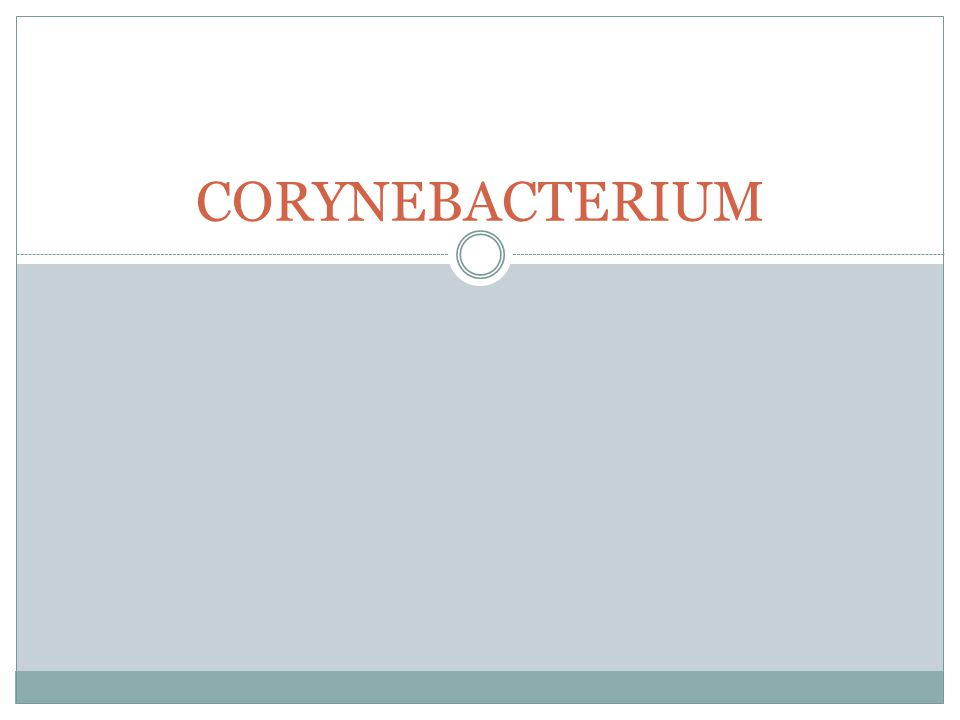 Therapi Anti difteri serum (ADS)  hrs diberikan sedini mgkin sejak d/ ditegakan Utk pemberian ADS  Skin tes  tes Schick  (+)/ (-)  tes Moloney  tahan/ tidak Antibiotik, Ertromisin Kortikosteoid Analgetik/ antipiretik Trakeostomi