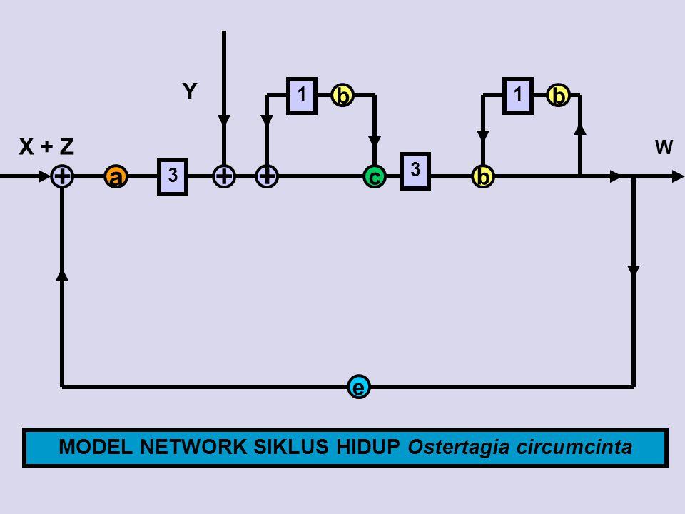 a 3 +++ b 1 b cb 3 1 e W X + Z Y MODEL NETWORK SIKLUS HIDUP Ostertagia circumcinta