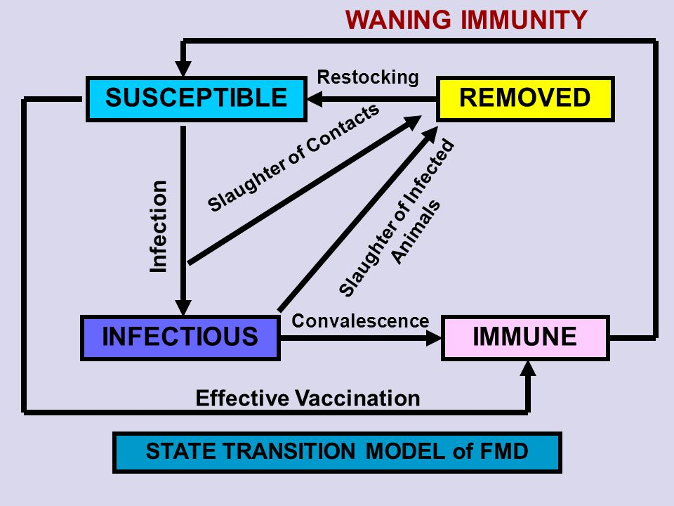 SUSCEPTIBLE IMMUNEINFECTIOUS REMOVED Infection Restocking WANING IMMUNITY Slaughter of Contacts Slaughter of Infected Animals Effective Vaccination Co