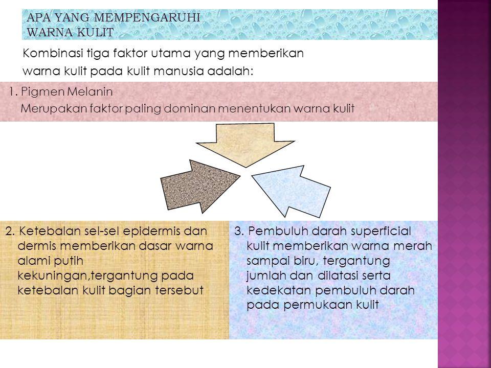 APA YANG MEMPENGARUHI WARNA KULIT 1. Pigmen Melanin Merupakan faktor paling dominan menentukan warna kulit Kombinasi tiga faktor utama yang memberikan