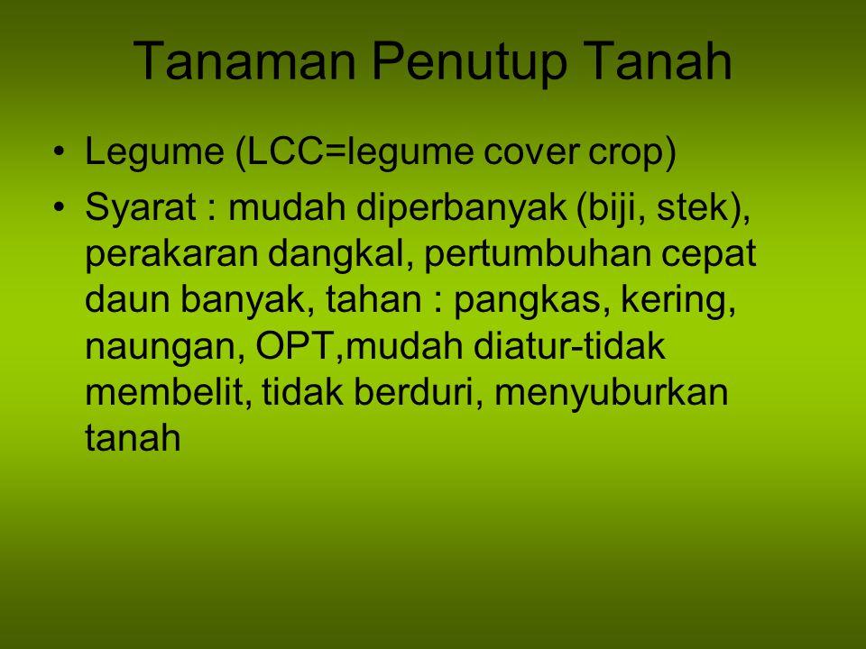 Tanaman Penutup Tanah Legume (LCC=legume cover crop) Syarat : mudah diperbanyak (biji, stek), perakaran dangkal, pertumbuhan cepat daun banyak, tahan