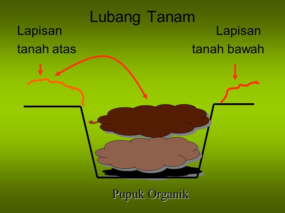 Lubang Tanam Lapisan tanah atas tanah bawah Pupuk Organik