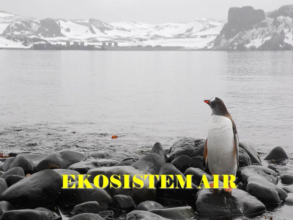 EKOSISTEM AIR