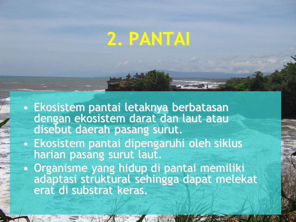 2. PANTAI Ekosistem pantai letaknya berbatasan dengan ekosistem darat dan laut atau disebut daerah pasang surut.Ekosistem pantai letaknya berbatasan d