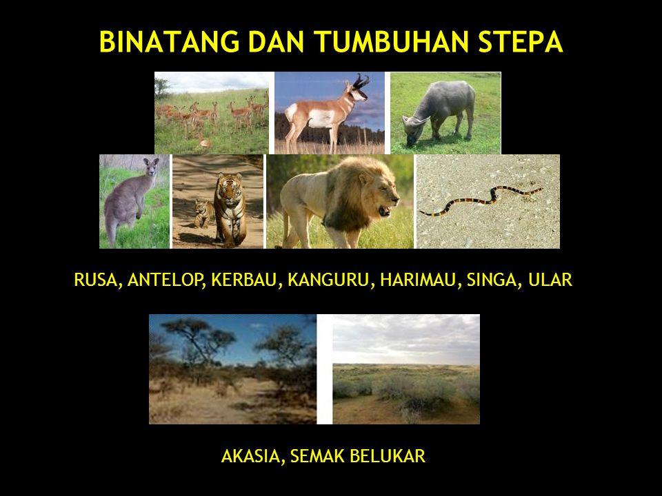 EKOSISTEM DARAT 3.BIOMA HUTAN BASAH Bioma Hutan Basah terdapat di daerah tropika dan subtropik.