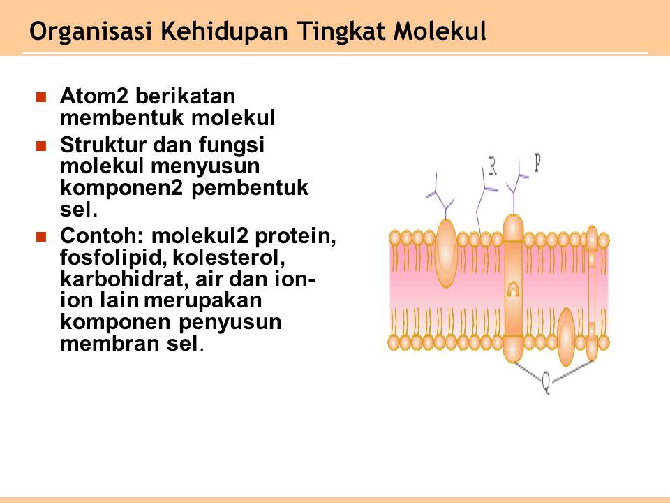 Atom2 berikatan membentuk molekul Struktur dan fungsi molekul menyusun komponen2 pembentuk sel. Contoh: molekul2 protein, fosfolipid, kolesterol, karb