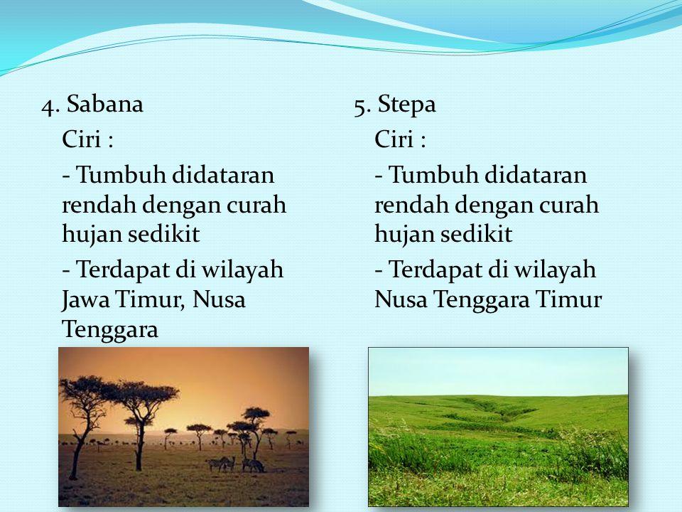 3. Hutan bakau Ciri : - Tumbuh di pantai yang landai dan berlumpur - Terdapat di pantai timur Sumatera, pantai utara Jawa, pantai di Kalimantan, panta