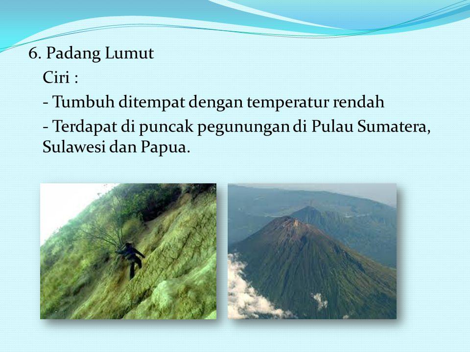 4. Sabana Ciri : - Tumbuh didataran rendah dengan curah hujan sedikit - Terdapat di wilayah Jawa Timur, Nusa Tenggara 5. Stepa Ciri : - Tumbuh didatar