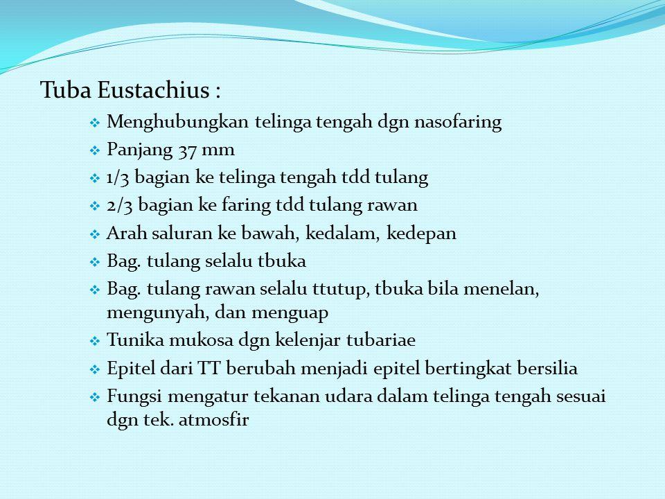 Tuba Eustachius :  Menghubungkan telinga tengah dgn nasofaring  Panjang 37 mm  1/3 bagian ke telinga tengah tdd tulang  2/3 bagian ke faring tdd tulang rawan  Arah saluran ke bawah, kedalam, kedepan  Bag.