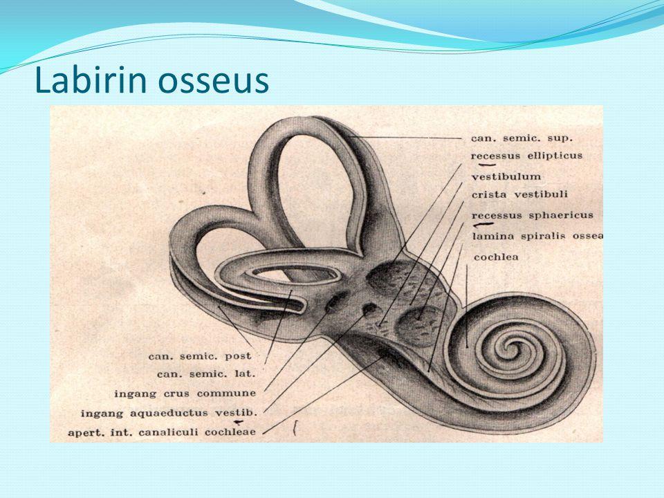 Labirin osseus