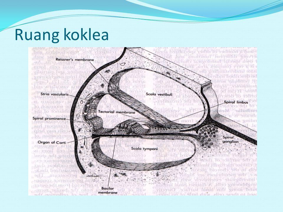 Ruang koklea