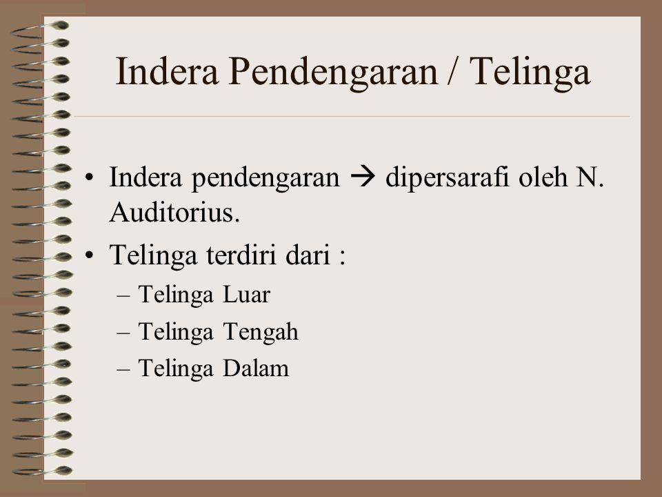 Indera Pendengaran / Telinga Indera pendengaran  dipersarafi oleh N. Auditorius. Telinga terdiri dari : –Telinga Luar –Telinga Tengah –Telinga Dalam
