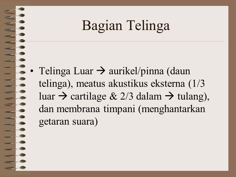 Bagian Telinga Telinga Luar  aurikel/pinna (daun telinga), meatus akustikus eksterna (1/3 luar  cartilage & 2/3 dalam  tulang), dan membrana timpan