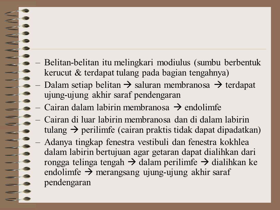 –Belitan-belitan itu melingkari modiulus (sumbu berbentuk kerucut & terdapat tulang pada bagian tengahnya) –Dalam setiap belitan  saluran membranosa