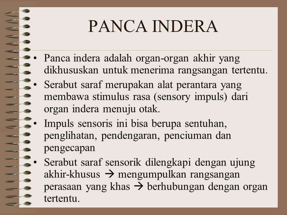 Panca indera adalah organ-organ akhir yang dikhususkan untuk menerima rangsangan tertentu. Serabut saraf merupakan alat perantara yang membawa stimulu