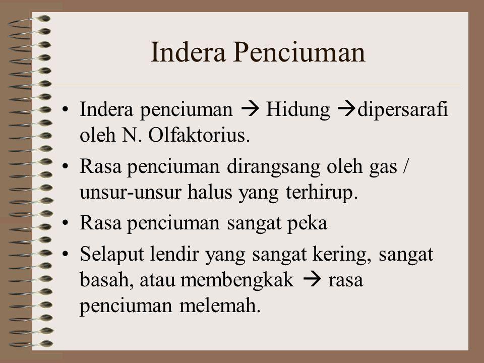 Indera Penciuman Indera penciuman  Hidung  dipersarafi oleh N. Olfaktorius. Rasa penciuman dirangsang oleh gas / unsur-unsur halus yang terhirup. Ra