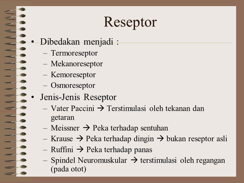 Reseptor Dibedakan menjadi : –Termoreseptor –Mekanoreseptor –Kemoreseptor –Osmoreseptor Jenis-Jenis Reseptor –Vater Paccini  Terstimulasi oleh tekana