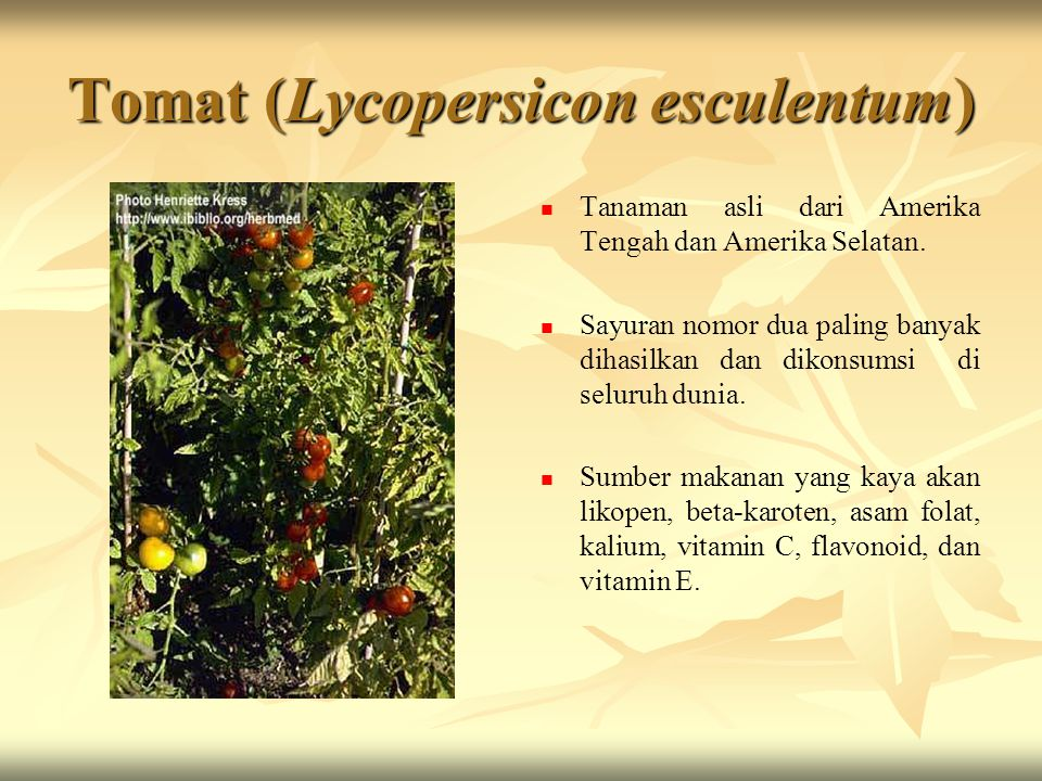 Tomat (Lycopersicon esculentum) Tanaman asli dari Amerika Tengah dan Amerika Selatan. Sayuran nomor dua paling banyak dihasilkan dan dikonsumsi di sel