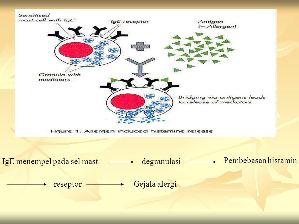 degranulasiIgE menempel pada sel mast Pembebasan histamin reseptorGejala alergi